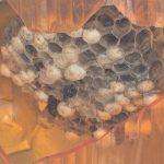 車のいろんなところに蜂の巣ばかりで要注意