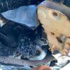 オイルフィルターをぶつければ高確率でエンジンが壊れる!下部にフィルター付いてる車は要注意